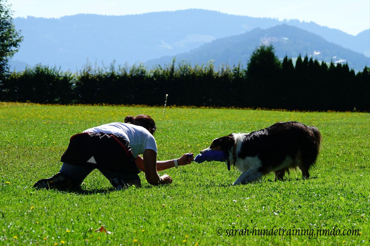 beutestreiten-hundeschule-saalfelden-sylvia