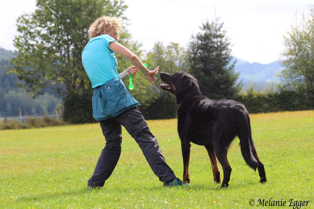 hundetraining-saalfelden-impulskontrolle