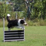 Obedience Hundeverein Saalfelden