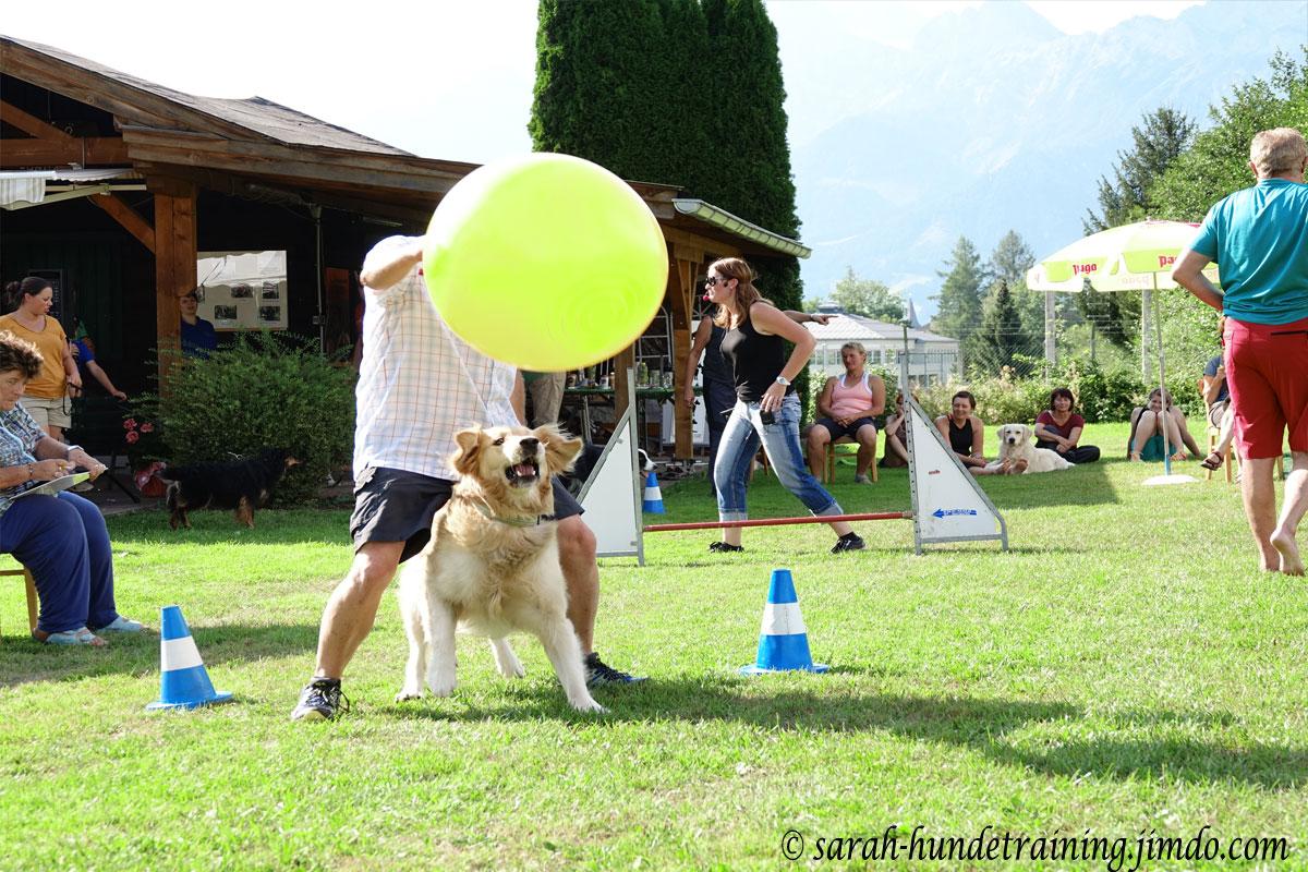 juxturnier-ball-hunde