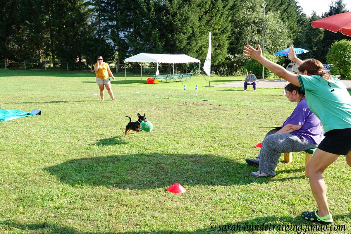 juxturnier-kleinster-hund-mit-groesstem-ball