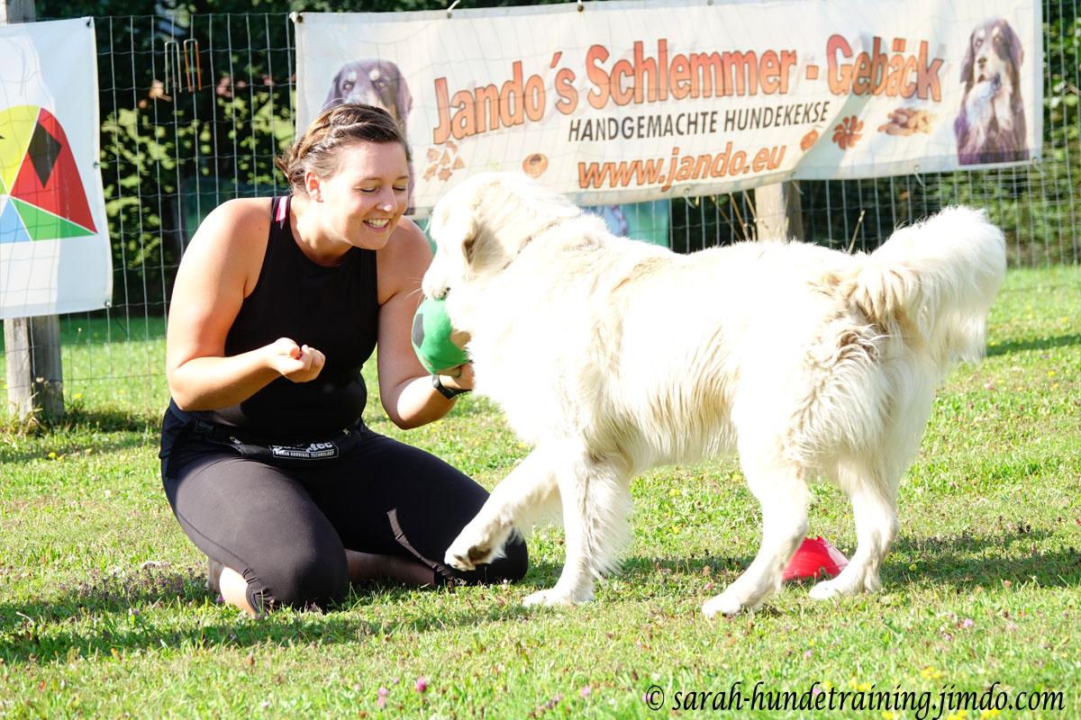 juxturnier-saalfelden-hundeverein