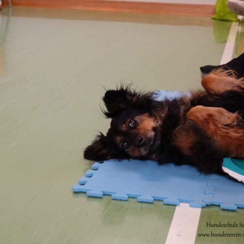 Balance-Workshop-Hundeschule-Saalfelden03