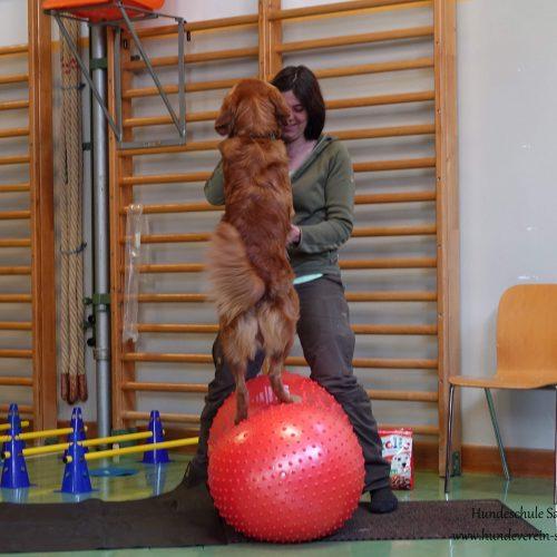 Balance-Workshop-Hundeschule-Saalfelden05