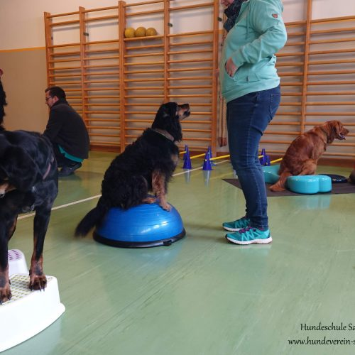 Balance-Workshop-Hundeschule-Saalfelden06