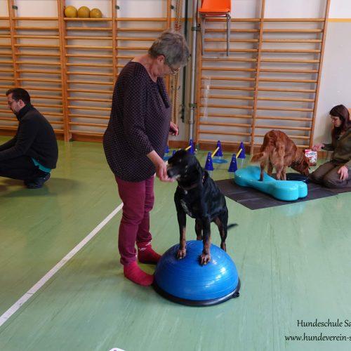 Balance-Workshop-Hundeschule-Saalfelden07