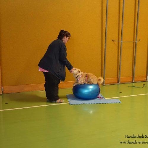 Balance-Workshop-Hundeschule-Saalfelden08