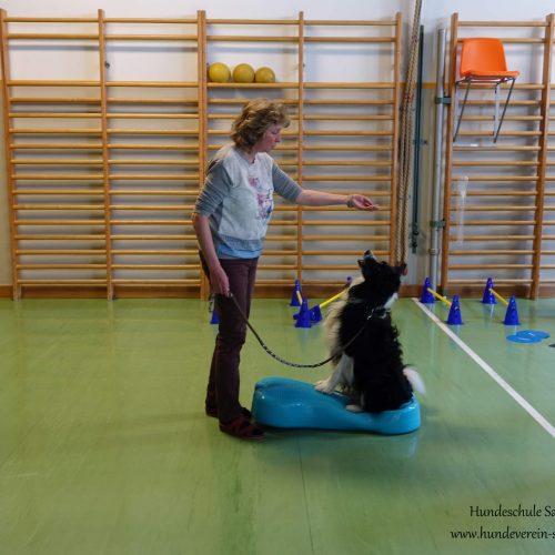 Balance-Workshop-Hundeschule-Saalfelden11
