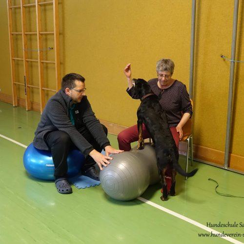 Balance-Workshop-Hundeschule-Saalfelden13