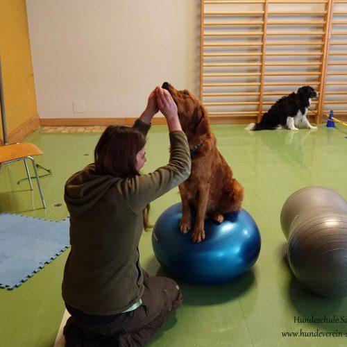 Balance-Workshop-Hundeschule-Saalfelden14