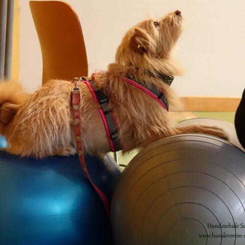 Balance-Workshop-Hundeschule-Saalfelden15