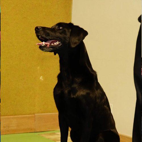 Balance-Workshop-Hundeschule-Saalfelden19