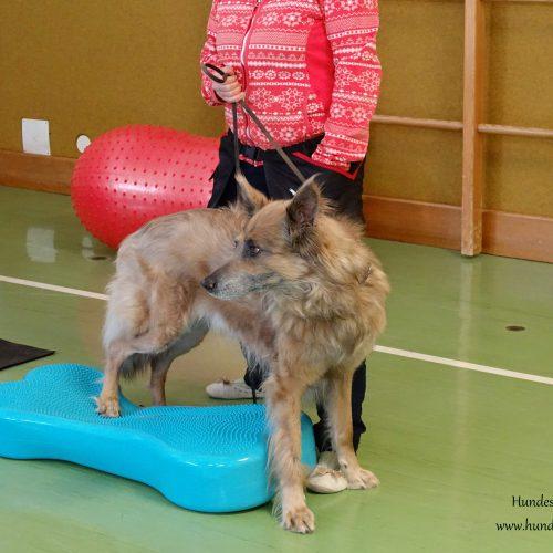 Balance-Workshop-Hundeschule-Saalfelden21