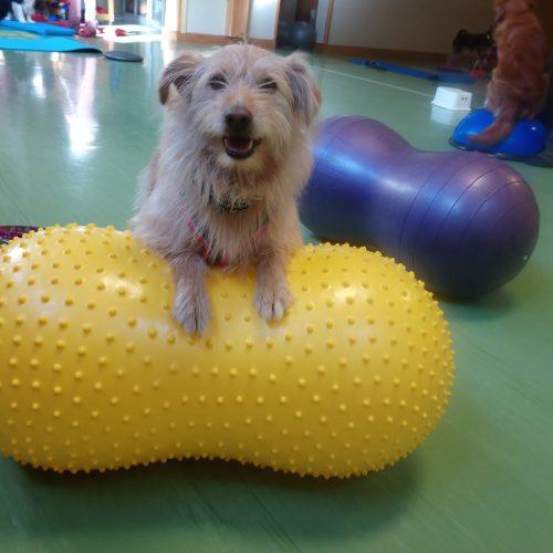 Balance-Workshop-Hundeschule-Saalfelden23