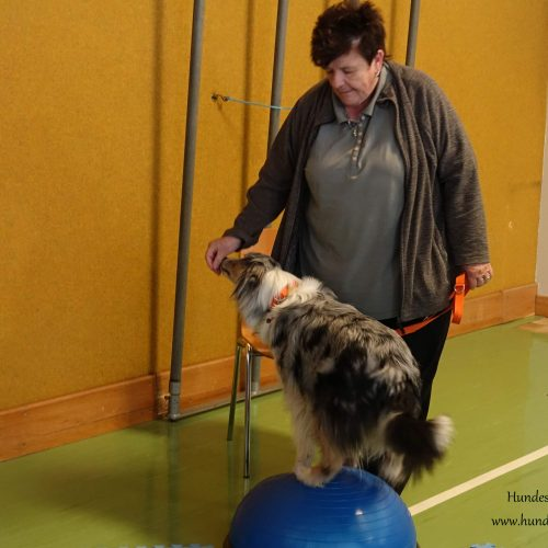 Balance-Workshop-Hundeschule-Saalfelden24