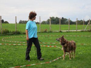 körpersprachliches Longieren für Anfänger mit Romy @ Hundeschule Saalfelden